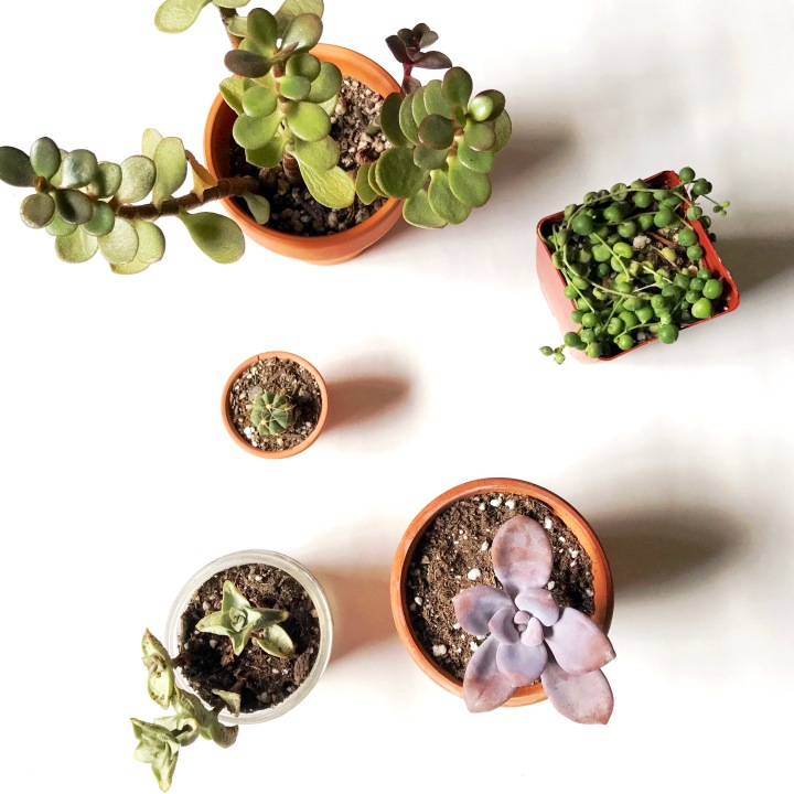 Keeping your succulents alive during the fall + winter months //
